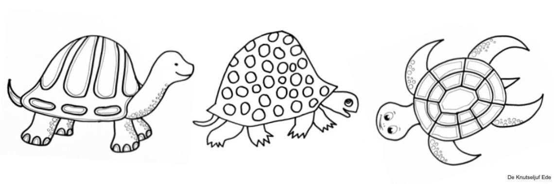 Kleurplaten Schildpadden In 2020 Met Afbeeldingen Kleurplaten