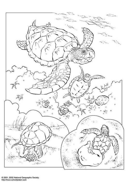 Coloring Page Sea Turtle Met Afbeeldingen Dieren Kleurplaten