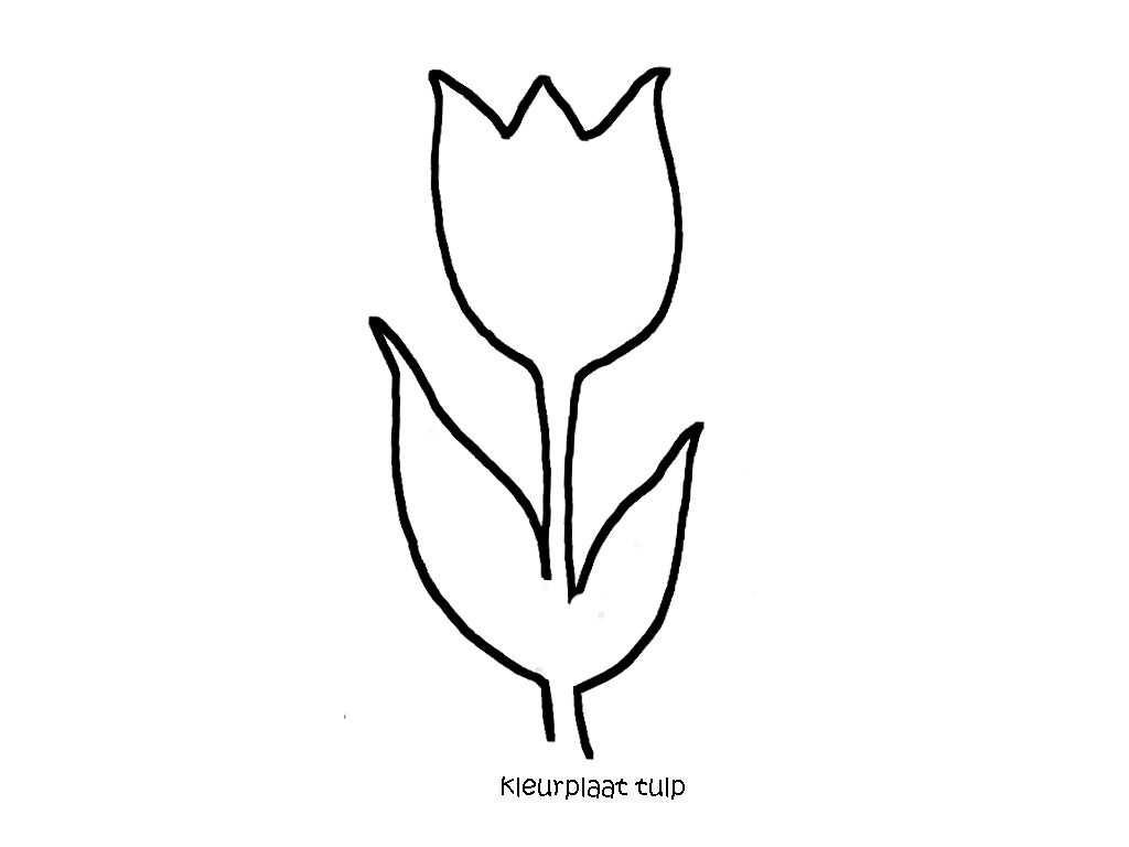 Kleurplaat Tulp Www Dewereldvanwiepje Nl Kleurplaten