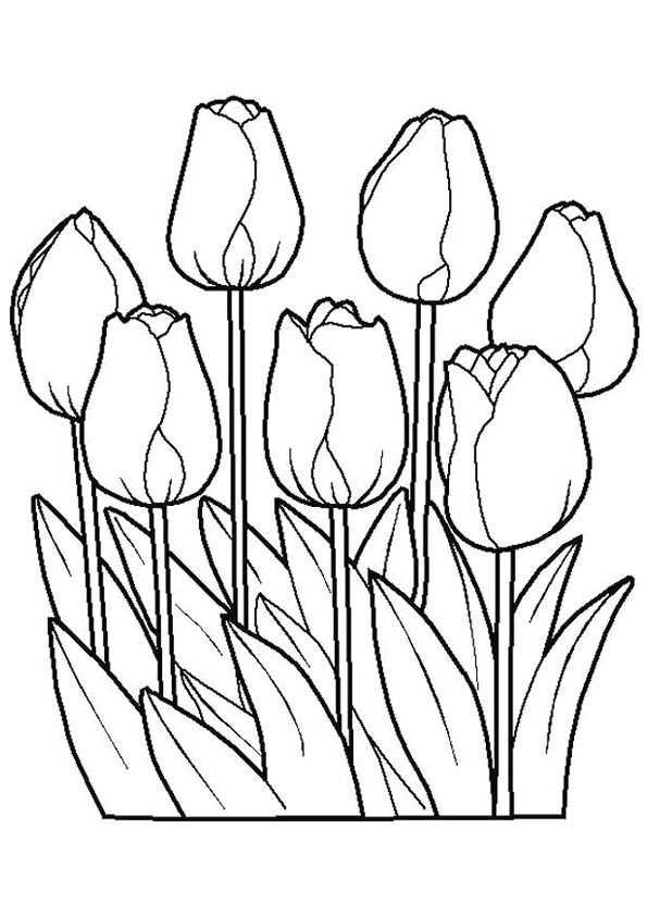 Bloemen Tekening Om In Te Kleuren Google Zoeken Kleurplaten