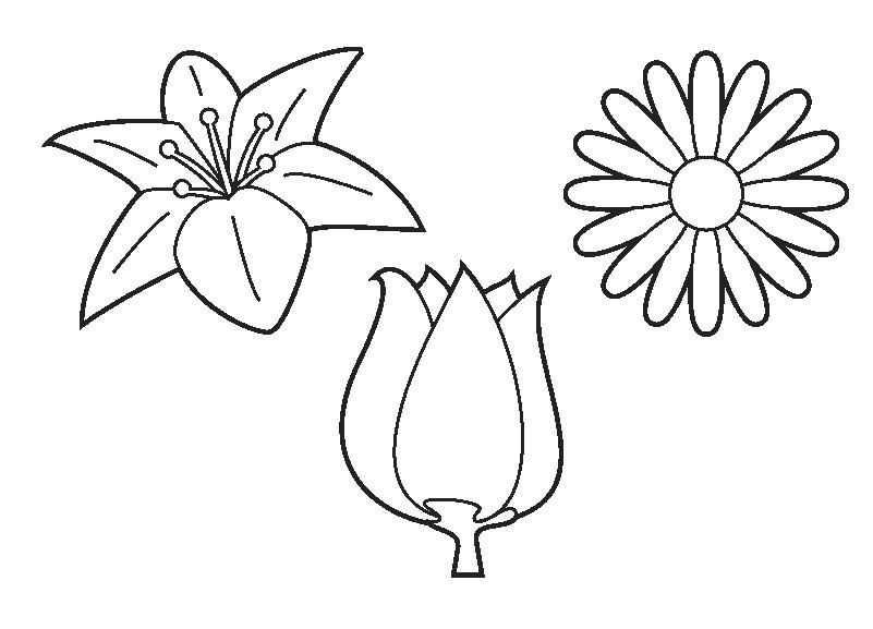 Kleurplaat Bloemen Met Afbeeldingen Kleurplaten Bloemen Thema