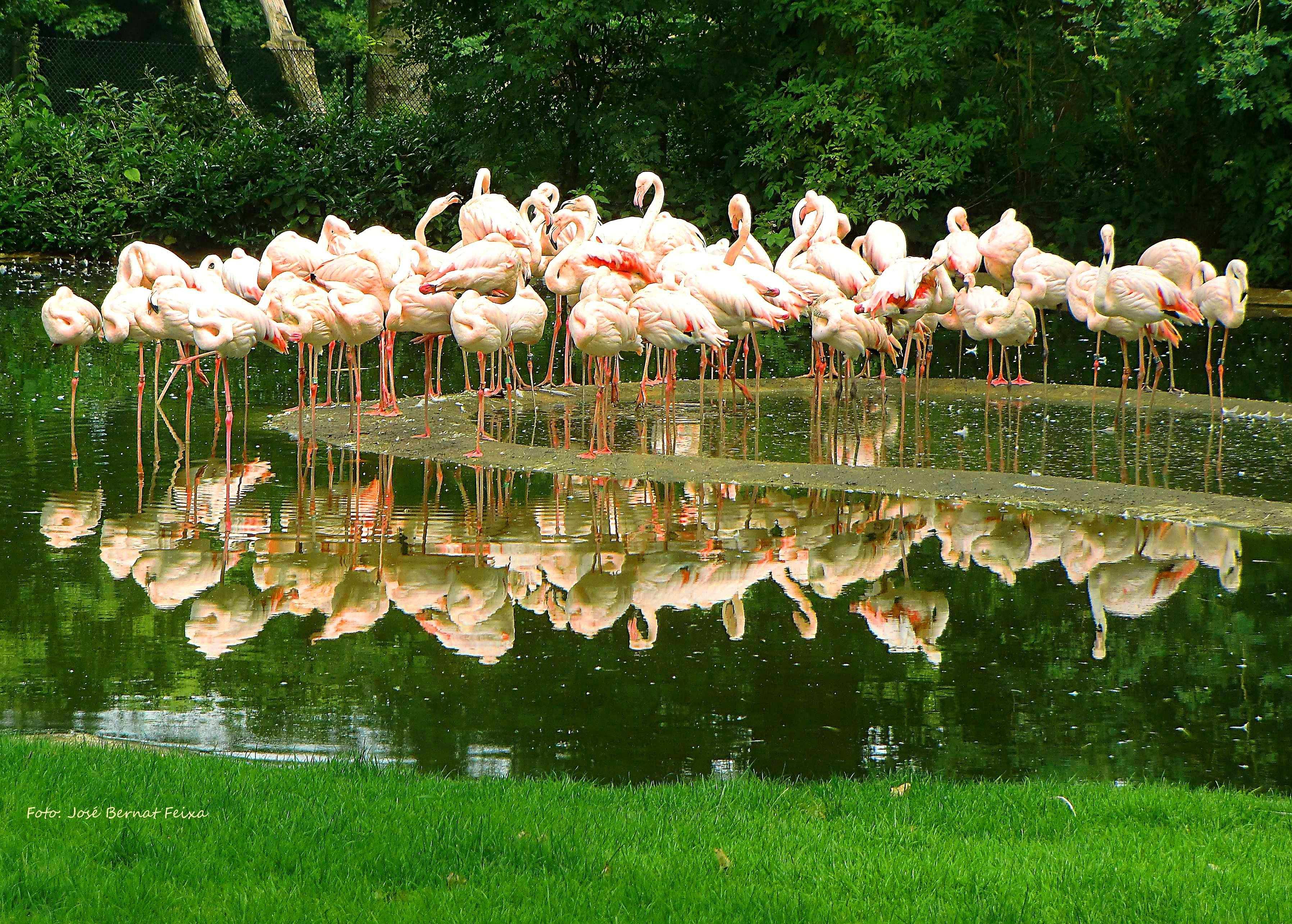 Flamingo S Burgers Zoo Arnhem With Images Zoo Arnhem