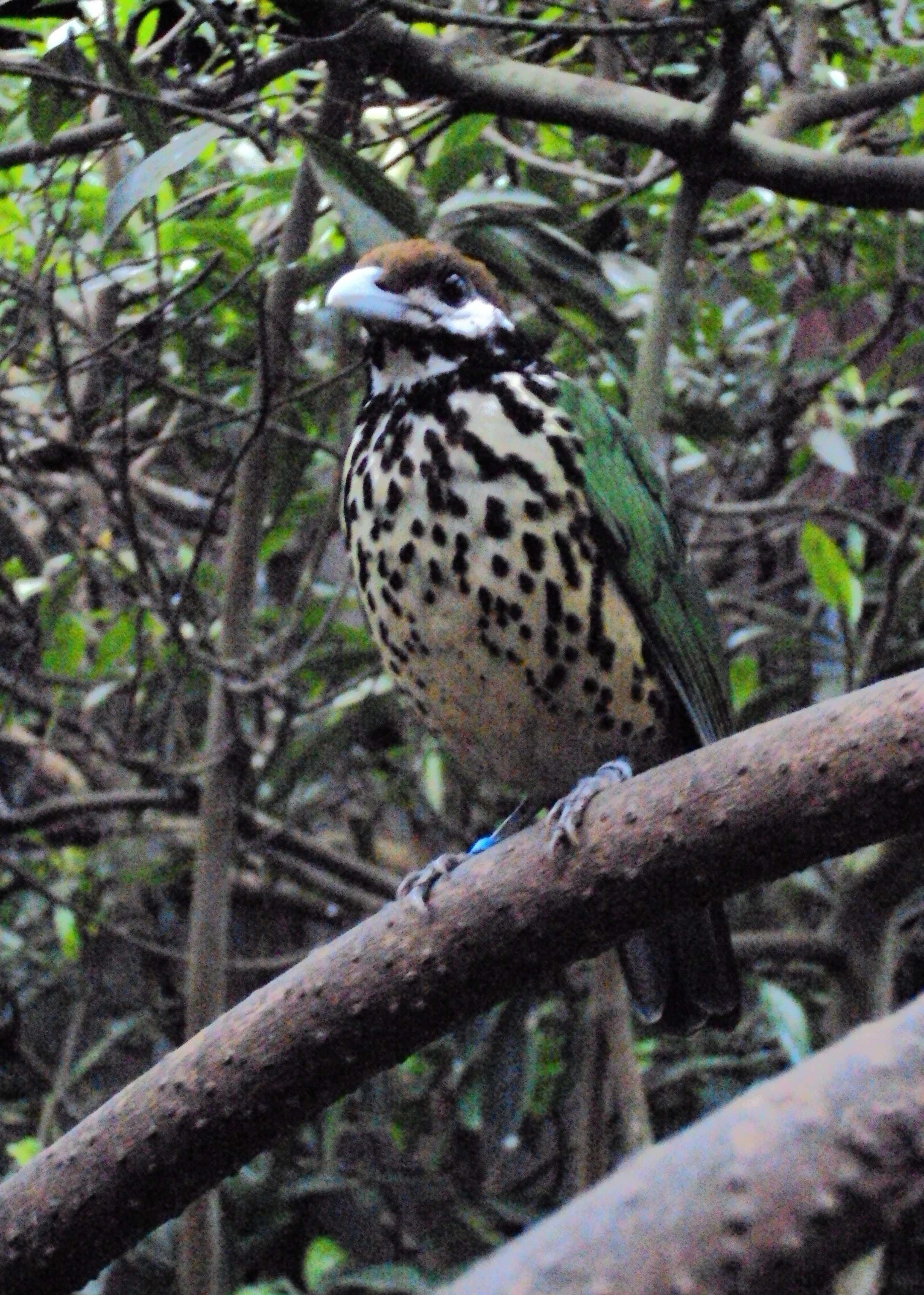 Koninklijke Burgers Zoo Met Afbeeldingen Dierenpark Duiken