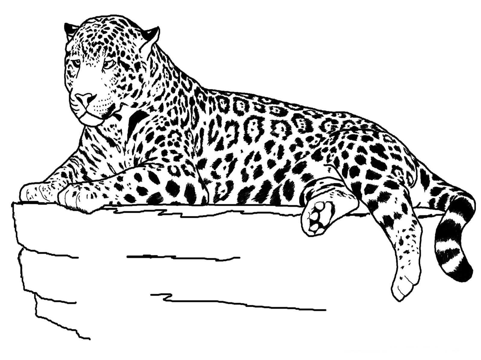 Jaguar Animal Coloring Pages Kleurplaten