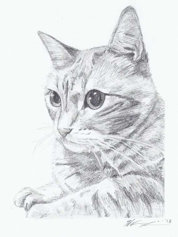 Pin Van Camden12 Op Cats Met Afbeeldingen Dieren Tekenen Kat