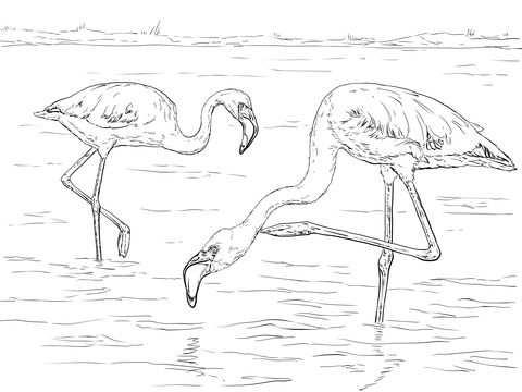 Kleine Flamingo Kleurplaat Categorieen Flamingo S Gratis