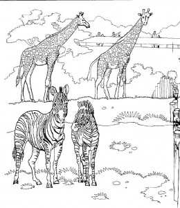 Giraffen In De Dierentuin Kleurplaat Jouwkleurplaten