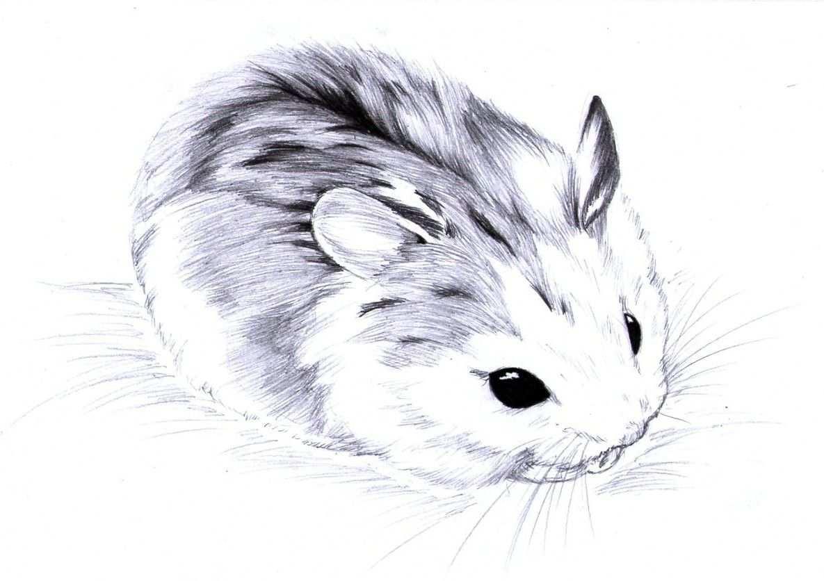 Dwerghamster Kleurplaat Hamster