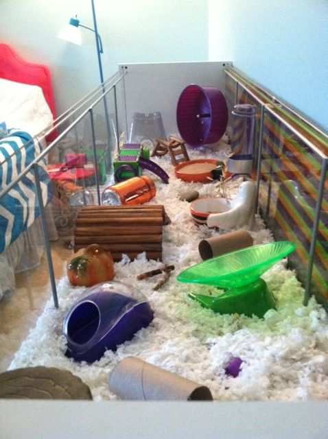 Proud Of Your Hamsters Cage With Images Hamster Cage Hamster