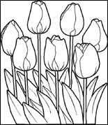 Tulpen Kleurplaat Gratis Kleurplaten Met Afbeeldingen