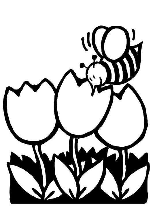 Kleurplaat Tulpen Met Bij Kinderen Leren Terwijl Ze Kleuren
