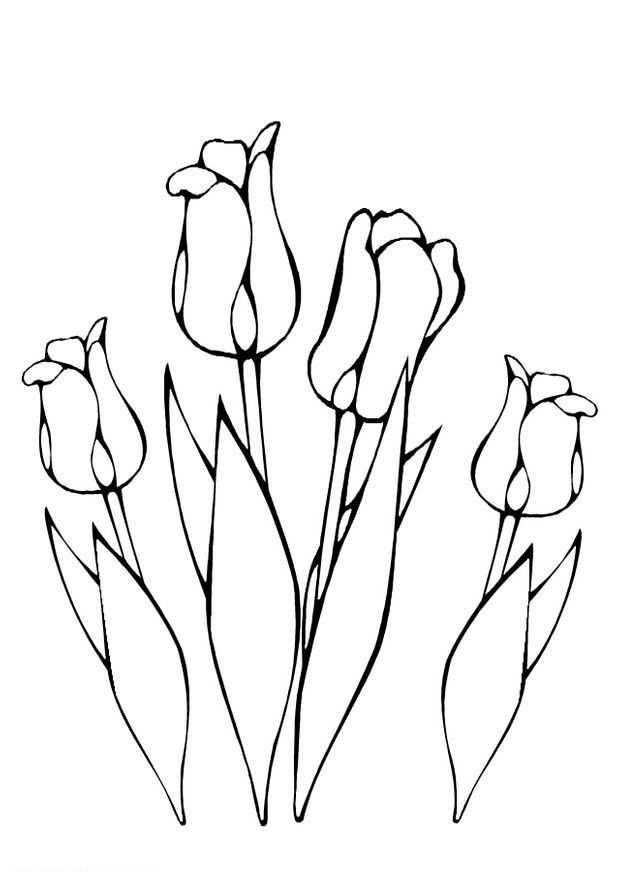 Kleurplaat Lente Tulpen Tulpen Kleurplaten