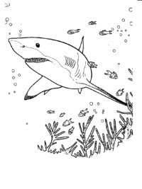 Kleurplaten Haaien Topkleurplaat Nl Kleurplaten En Dieren