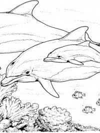 Pin Van John Calkhoven Op Dolfijnen In 2020 Dolfijnen Kleurplaten