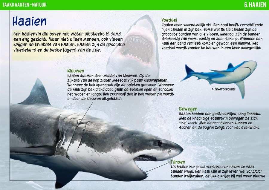 Na 6 Haaien 1 Taakkaarten Walvissen En Dieren