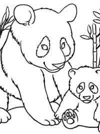 Pandabeer Kleurplaten Met Afbeeldingen Pandaberen Dieren