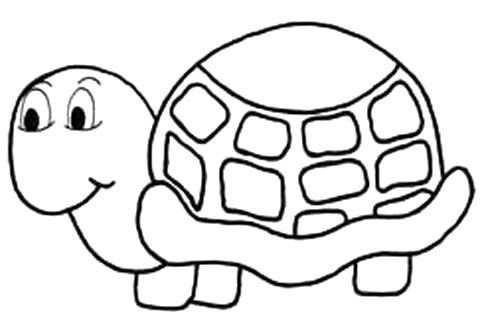 Pin Van Sabine Ruiter Op Knutsel Met Afbeeldingen Schildpad