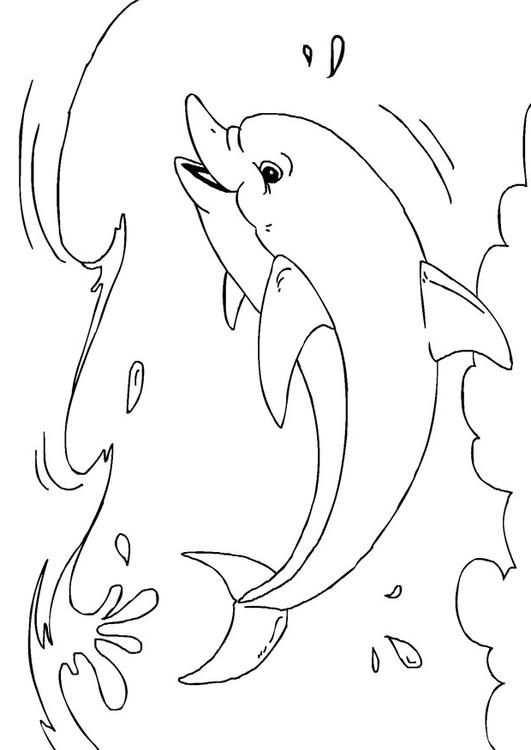 Kleurplaat Dolfijn Afb 27233 In 2020 Kleurplaten Dolfijnen