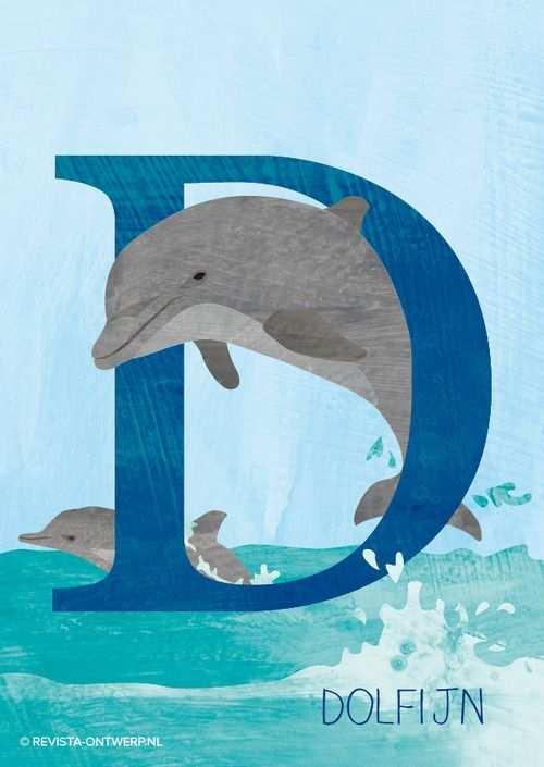 De D Is Van Dolfijn Met Zijn Staart Maakt Hij Snelheid In Het
