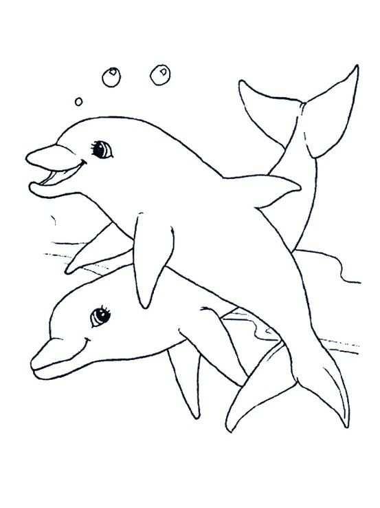 Dolfijn Met Afbeeldingen Dieren Kleurplaten Kleurplaten