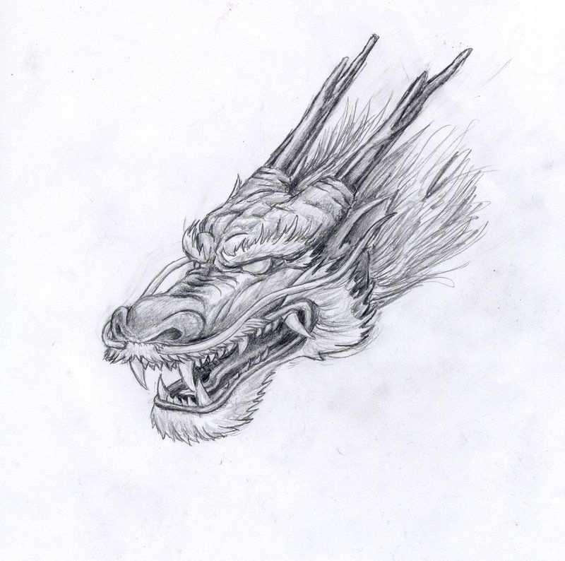 Chinese Dragon Een Betere Schets Voor Het Hoofd Van De Draak
