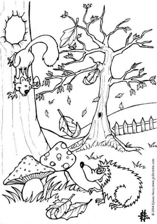 Kleurplaat Herfst Egel En Eekhoorn Kinderen Leren Terwijl Ze