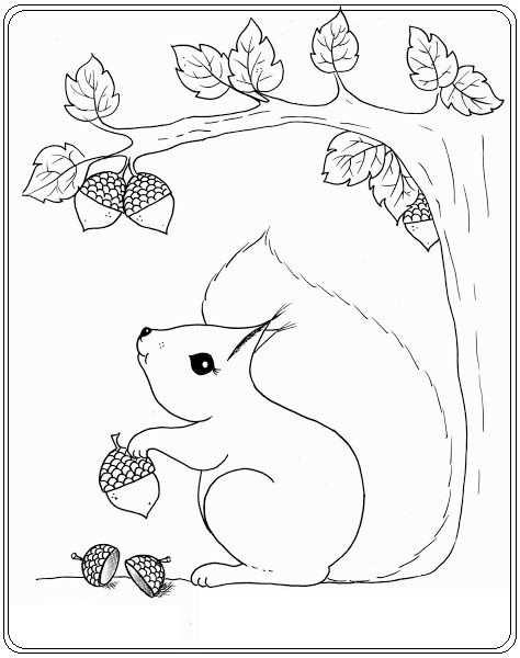 Eekhoorn Met Afbeeldingen Kleurplaten Herfst Knutselen