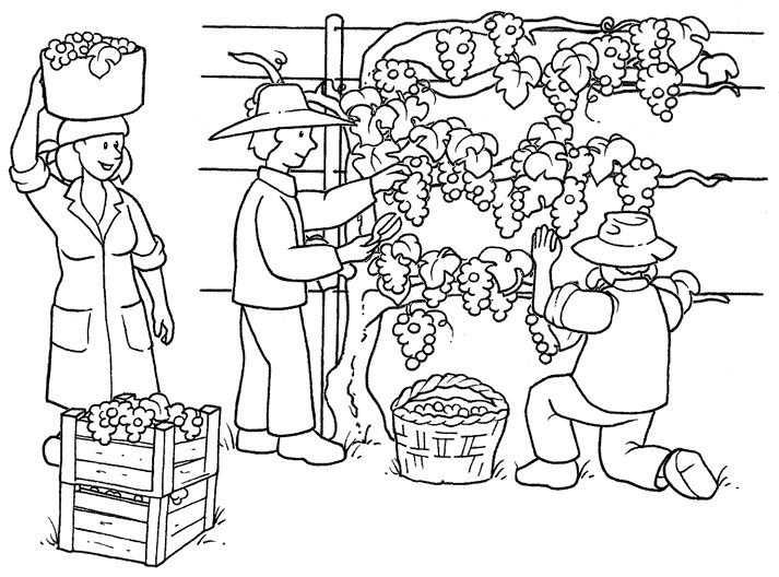 Druiven Plukken Kleurplaten En Fruit