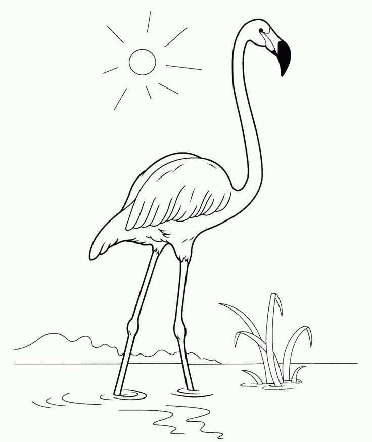 Kleurplaat Flamingo Handwerk Crafts Flamingo Kleurpagina