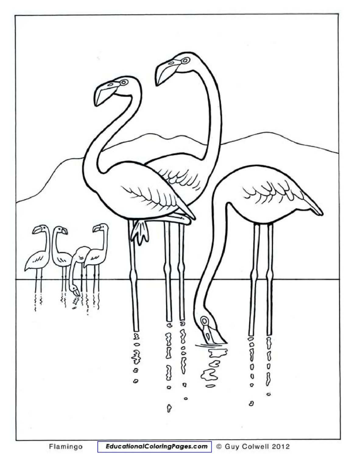 Natural Coloring Books Animal Coloring Pages Flamingo Coloring