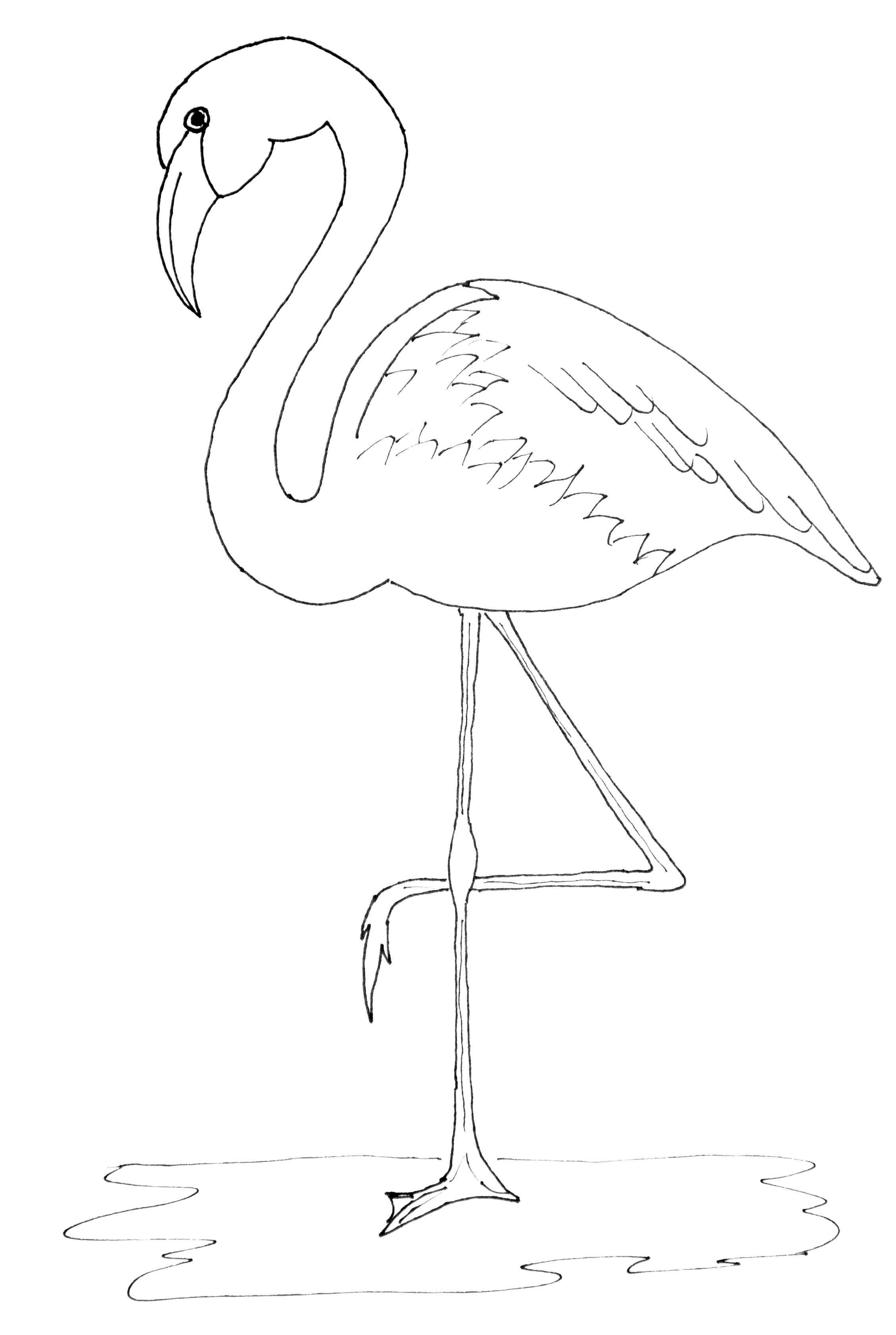 It S Flamingo Friday Kleurplaten Patronen Vogels Tekenen