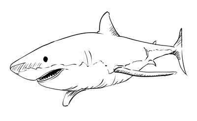 Another Shark Haai Tekenen Haai Tekenen