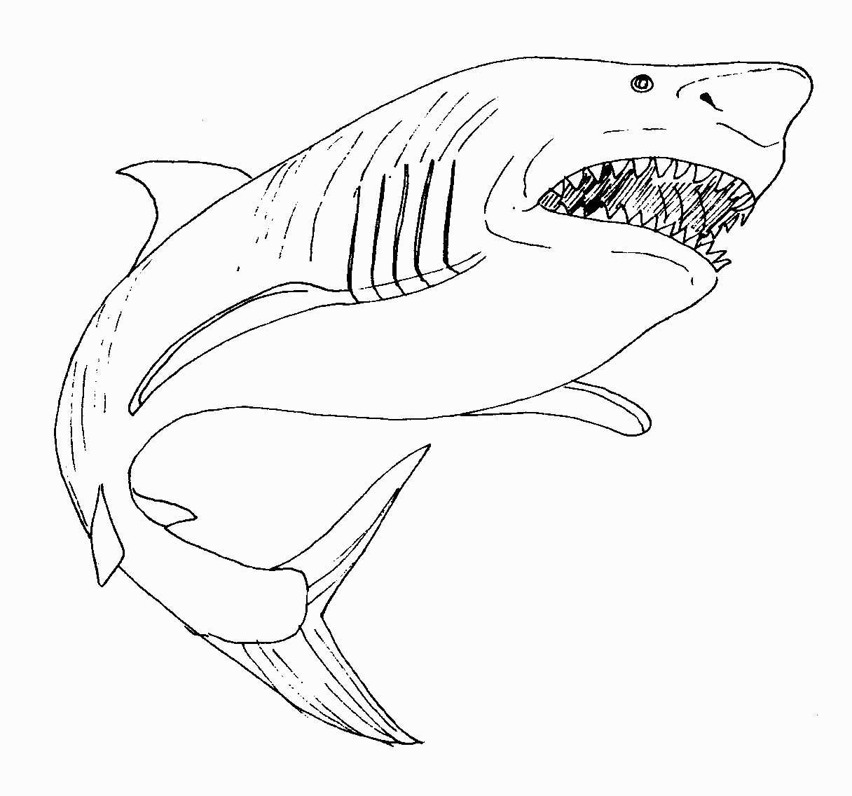 28 Great White Shark Coloring Page In 2020 With Images Shark