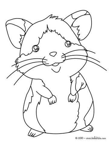 Simple Coloring Pages Coloring Pages Of Hamsters About Pat