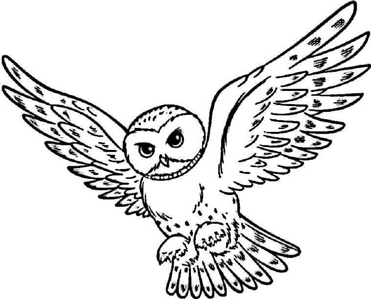 Kleurplaat Kleurplaten Harry Potter 24 Tegninger Harry Potter