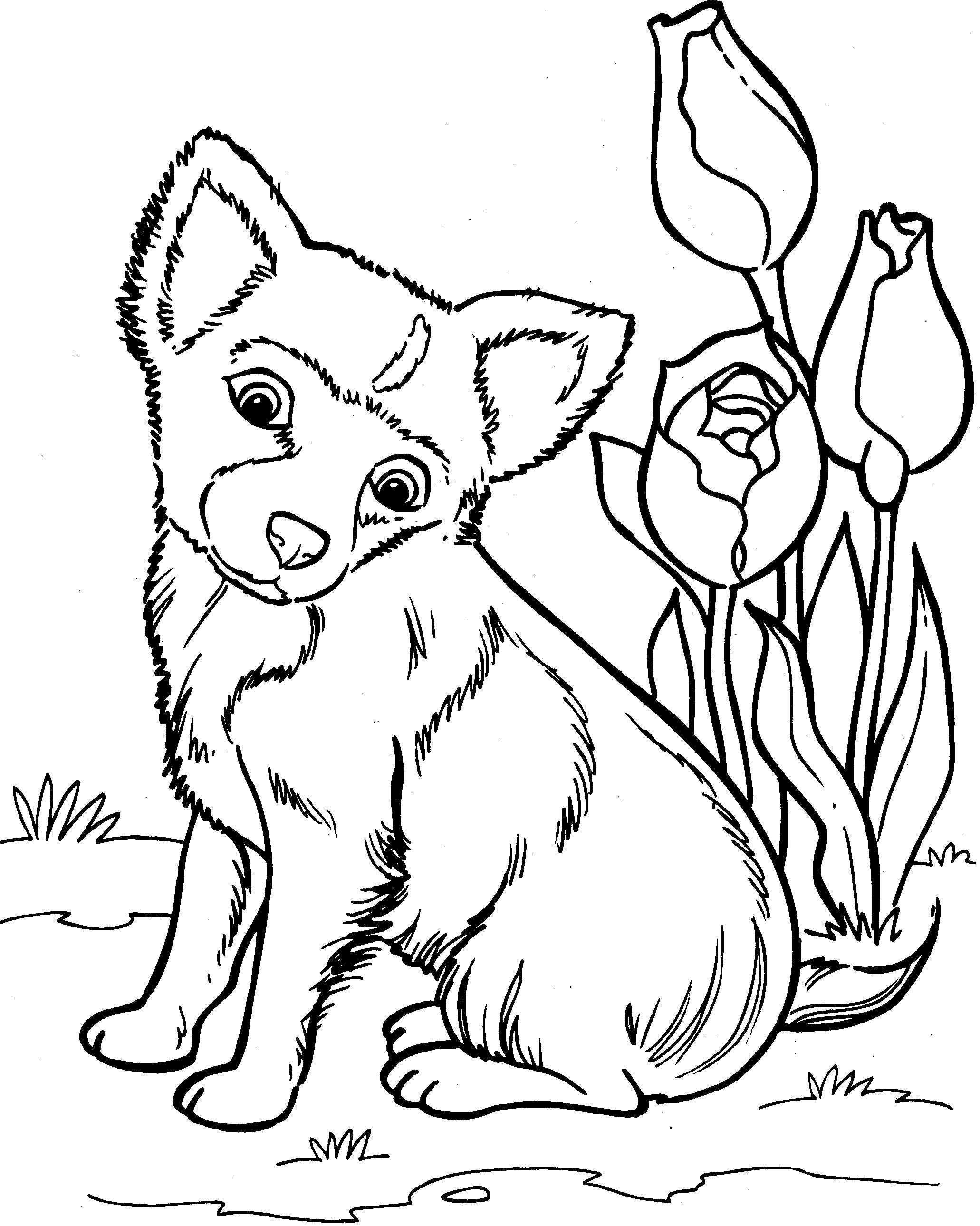 Honden Kleurplaat Kleurplaten Dieren Tekenen Dieren Kleurplaten