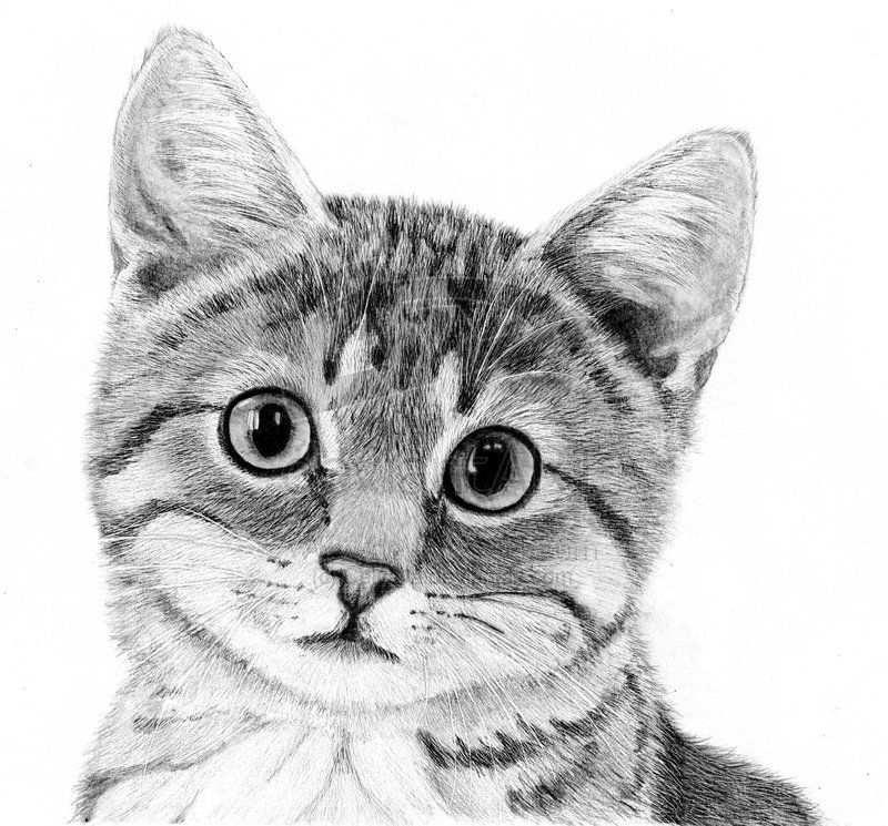 Katten Tekeningen Google Zoeken Kattenkunst Dieren Tekenen