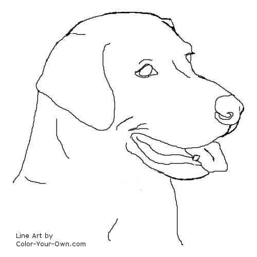 Labrador Retriever Headstudy Line Art With Images Labrador