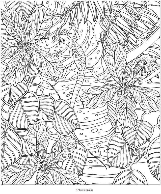 Welkom Bij Dover Publications Kleurplaten Kleurboek Kleuren