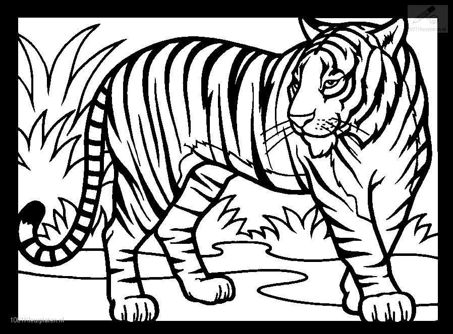 Coloringpage Tiger Coloring Page 1jpg With Images Tiger