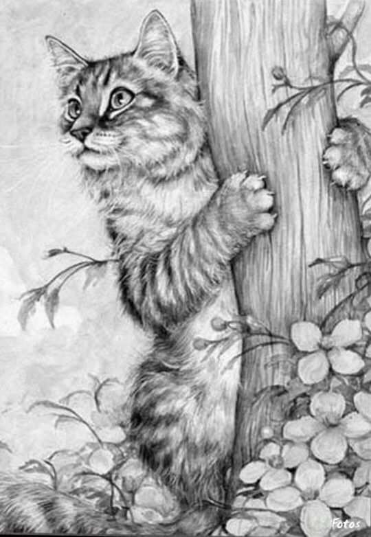Cat Pet Animal Coloring Pages Colouring Adult Detailed Advanced