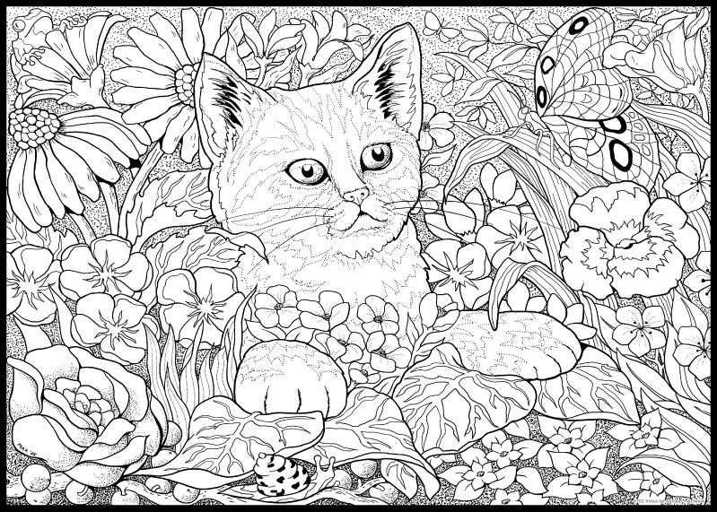 Coloring For Adults Kleuren Voor Volwassenen Cat Kitten