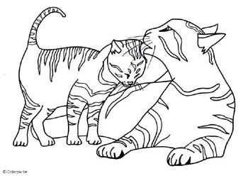 Katten Kleurplaten Kleurplaten Voor Volwassenen Met