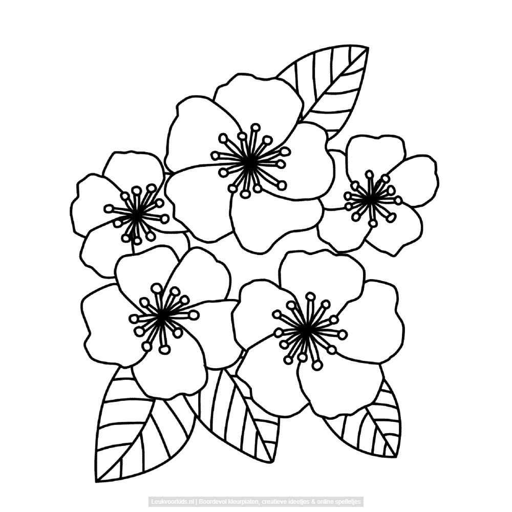 Bekijk Bloemen Kleurplaat Met Afbeeldingen Bloemen Tekenen