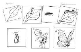 Afbeeldingsresultaat Voor Werkblad Vlinder Thema Lente Pasen