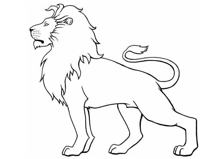 Kleurplaat Leeuw Disegno Di Leone Leone Arte Schizzi Di Animali