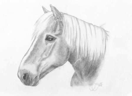 Dieren Tekenen Google Zoeken Dieren Tekenen Paard Tekeningen