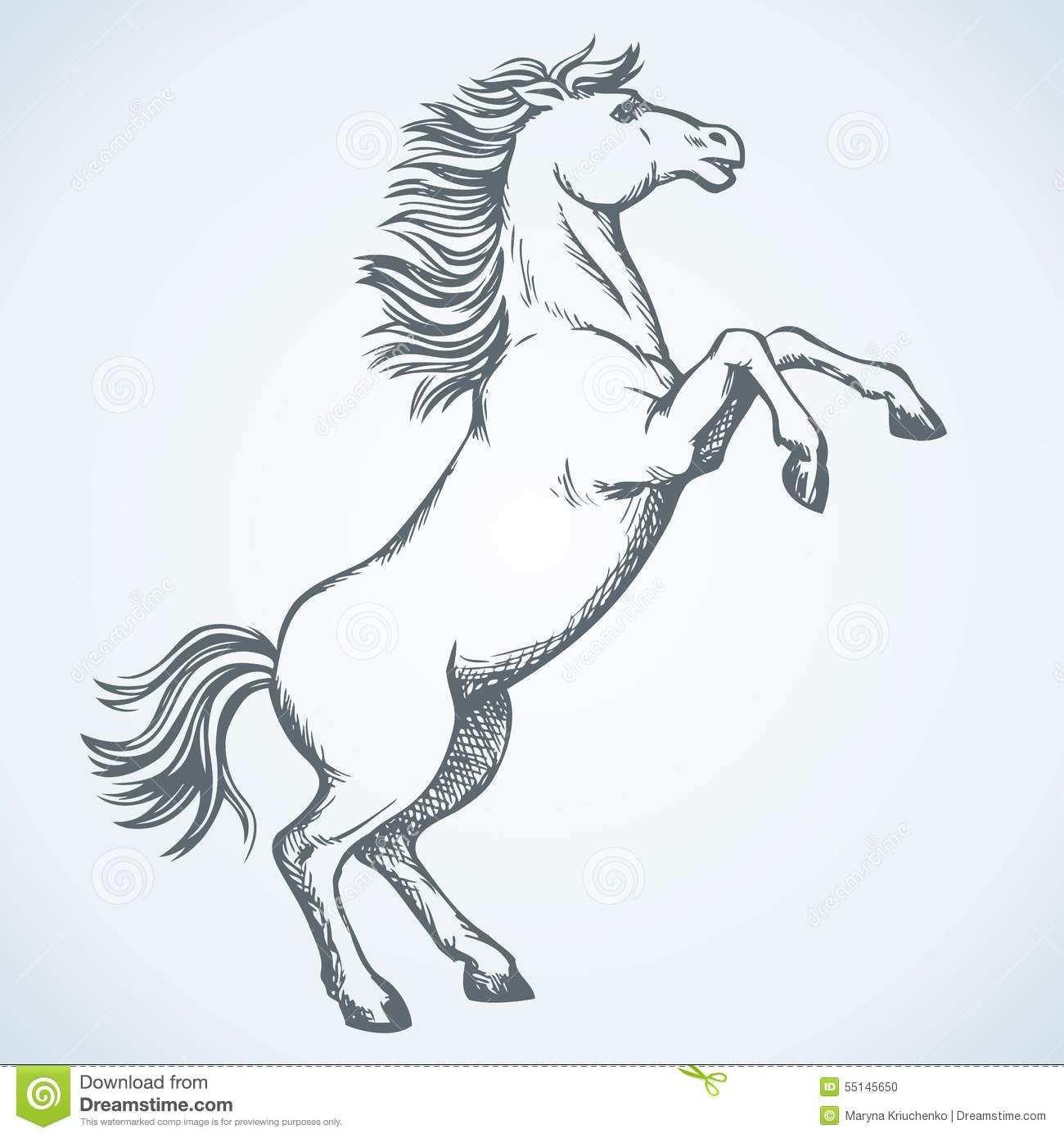 Afbeeldingsresultaat Voor Steigerend Paard Tekenen Met