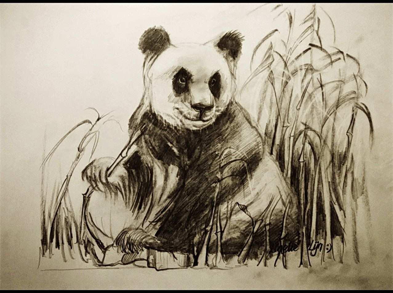Hoe Teken Je Een Panda Dieren Tekenen 25 Dieren Tekenen