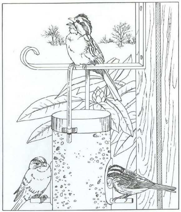 Kleurplaat Natuur Rondom Het Huis Vogels With Images